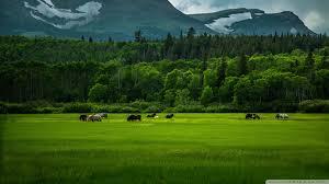 wild horses mountains
