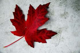 canada day maple leaf